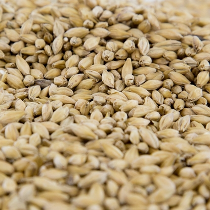 Picture of Gambrinus Pilsner Malt
