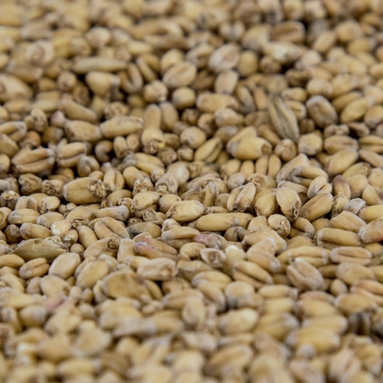 Picture of Gambrinus Organic Wheat Malt