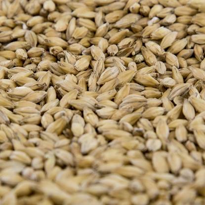 Picture of Gambrinus BC Pale Malt